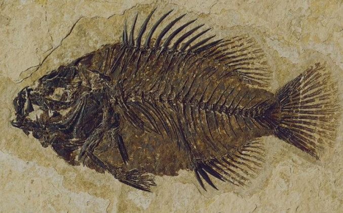U Meksiku pronađen fosil ribe star 95 miliona godina
